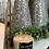 Thumbnail: Winter Dreams Candle