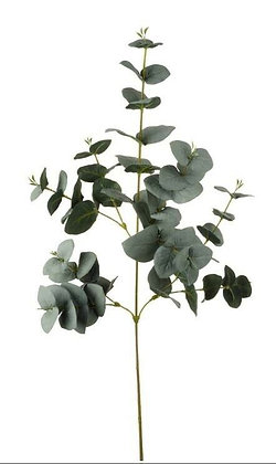 Eucalyptus Silver Green Stem - Parlane Living