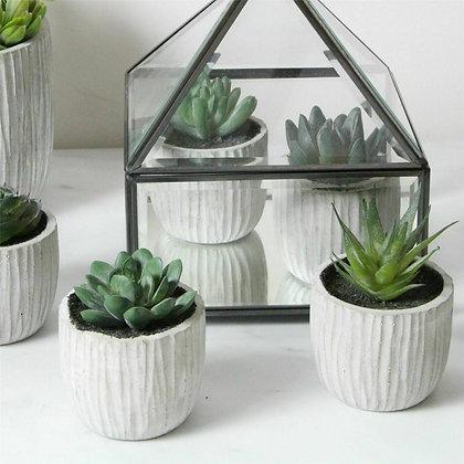 Mini Green Potted Succulent in Concrete Pot - Gisela Graham