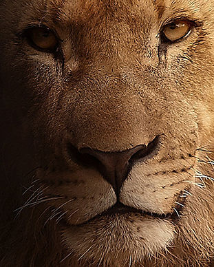 140-8-africa-alive.jpg