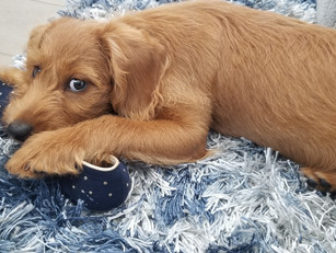 D&I Lessons through the lens of a puppy