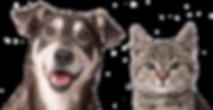 Dog & Cat Transparent for Web.png