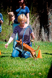 Dog Contests