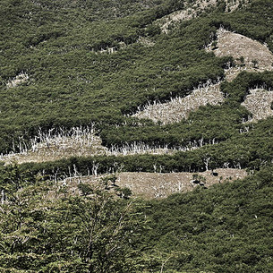 Patagonia Forests (variation 1)