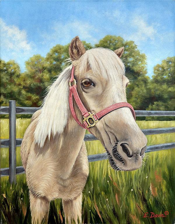 shetland pony_1200.jpg
