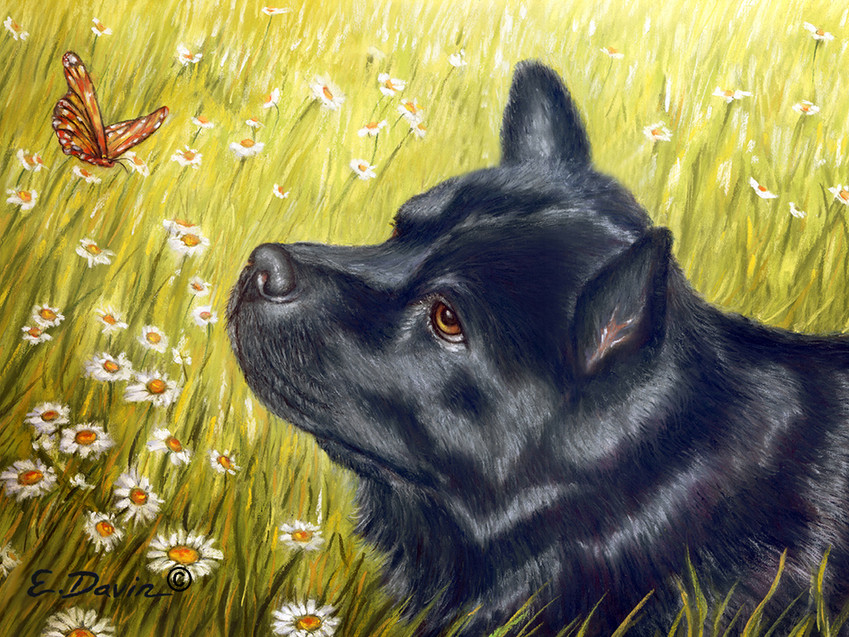"""""""Chow Chow""""  Pastel, Sold"""