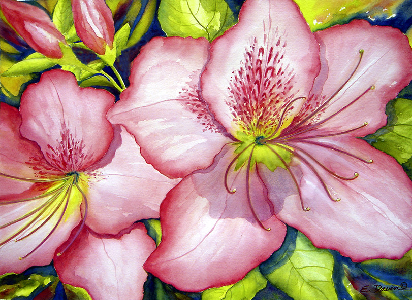 """""""Pink Azaleas""""  Watercolor, Private Collection"""