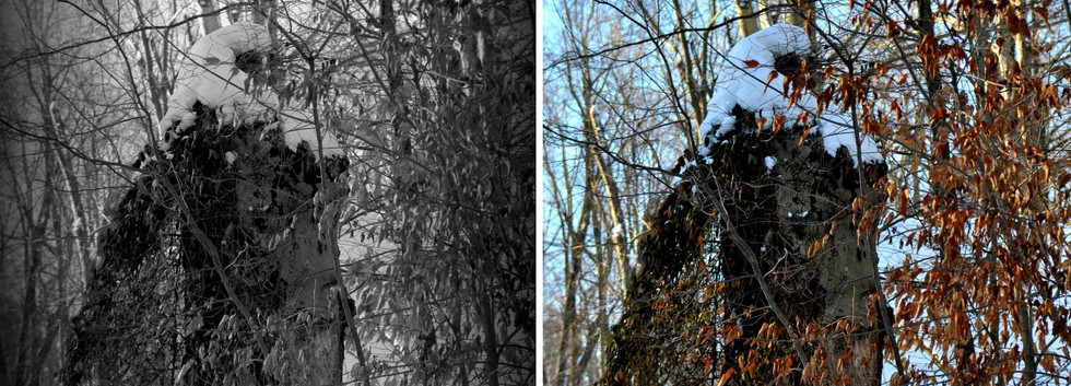 כי האדם עץ השדה.jpg