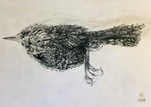 Dead Wren at the foot of art