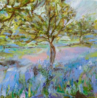 Bluebell Wood Roslin Glen
