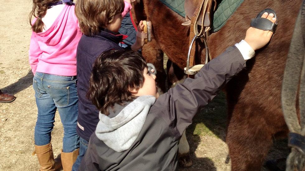 Actividad con caballos para niño/as pequeños