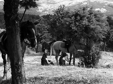 Caballos en el Parque nacional de Guadarrama