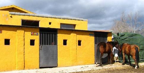 Caballos en libertad en centro ecuestre (El Boalo) Parque nacional