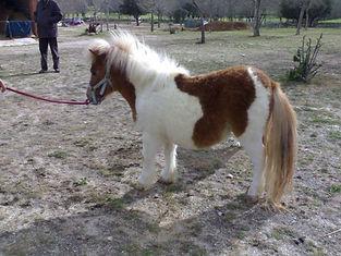Un lugar con caballos y ponies en La pedriza