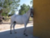 paseos a caballo en la sierra de madrid