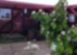 Vagon terraza caballos