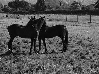 rutas a caballo por el parque de la pedriza