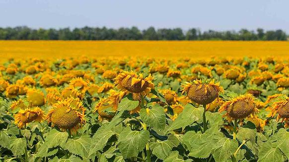 agricultura-campo-ucrania-6.jpg