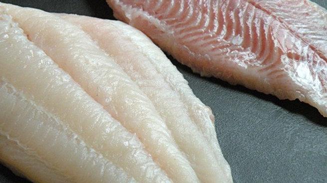 Catfish Fillet 鲇鱼片