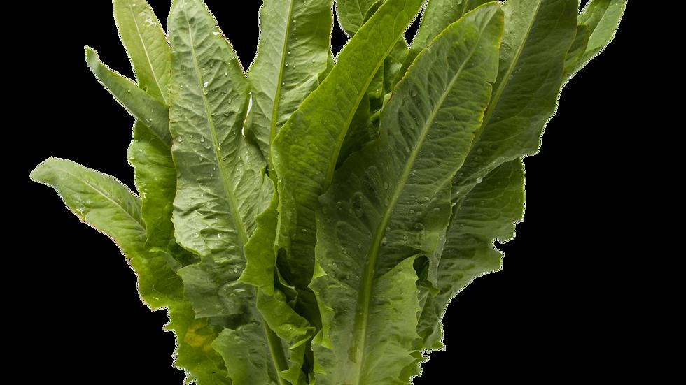 A-Choy 油麦菜