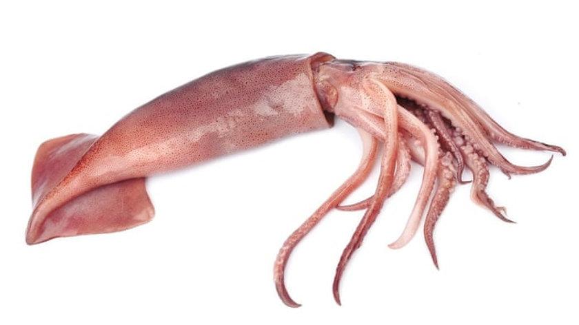 Squid 鱿鱼