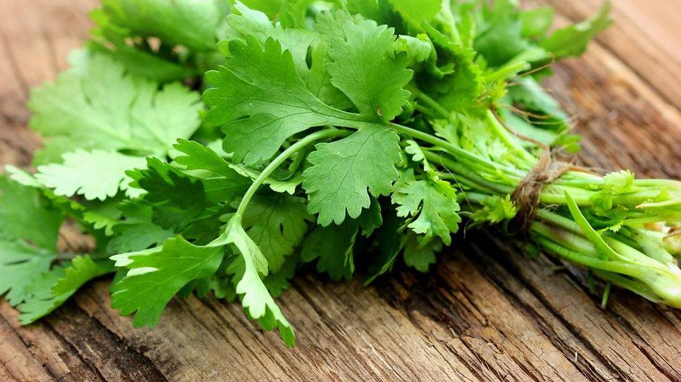 Cilantro 香菜