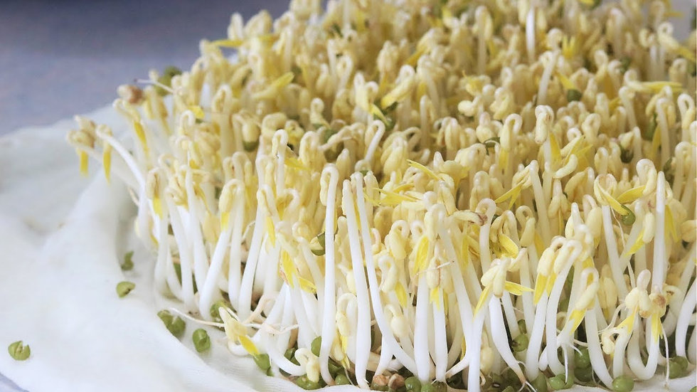 Bean Sprouts 豆芽菜