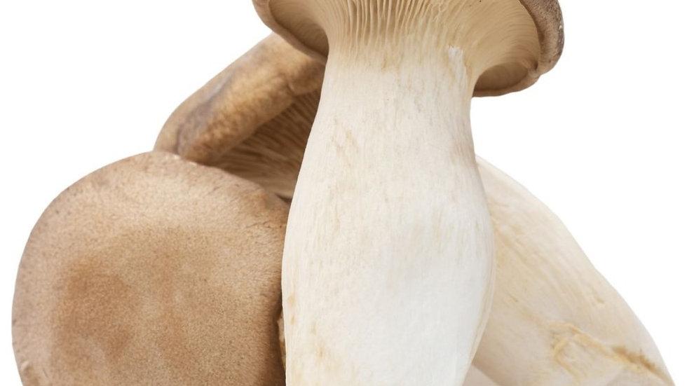 King Oyster Mushroom 鸡腿菇