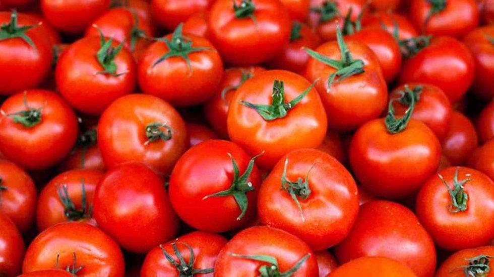 Tomato 西红柿