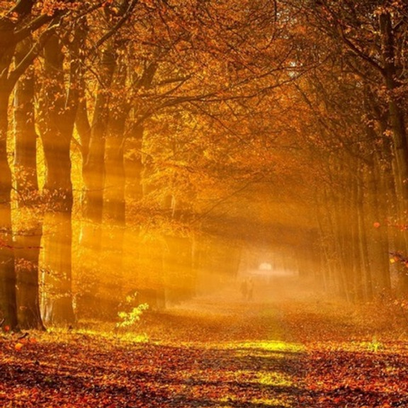 Align With Autumn w/ Christopher Miller