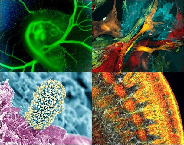 Биология внутри нас