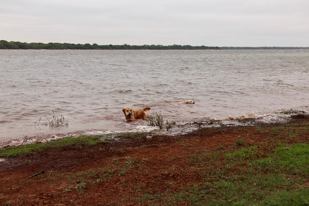 Iago et Iris dans le rio Uruguay // Iago and Iris in Rio Urugay