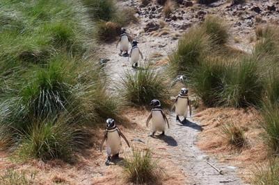 Puerto Madryn avec des enfants