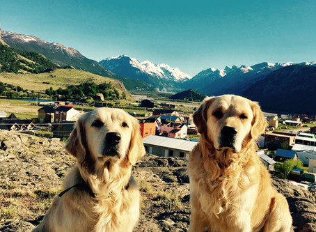Voyager avec son chien en Argentine // Traveling with a dog in Argentina