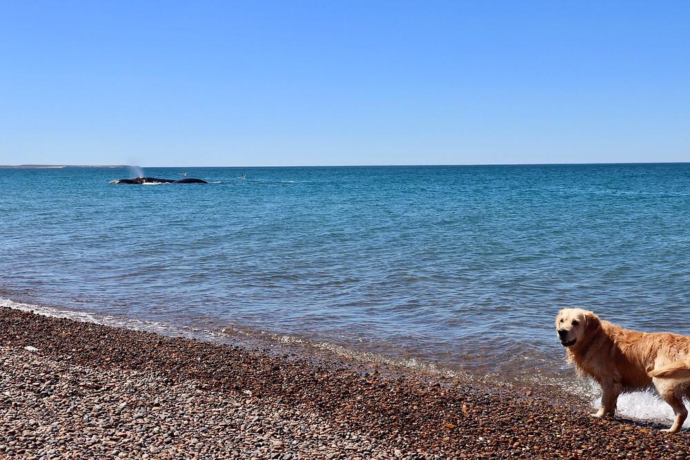 Iago avec une baleine au loin