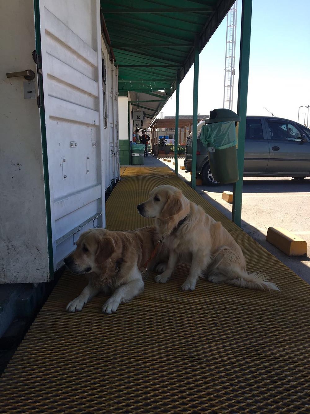 Iris et Iago au port de Zarate