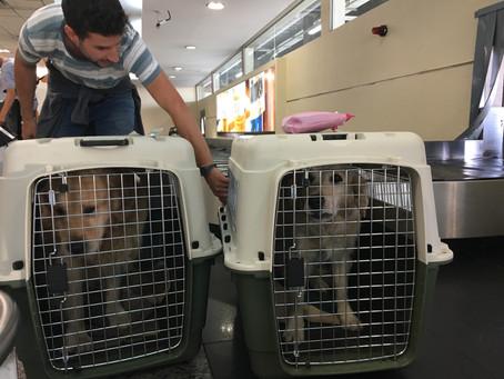 Comment voyager en amérique du sud avec son chien (article + vidéo) // How to travel in South Americ