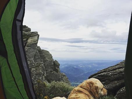 Traveling with a pet - Voyager avec son compagnon à quatre pattes..