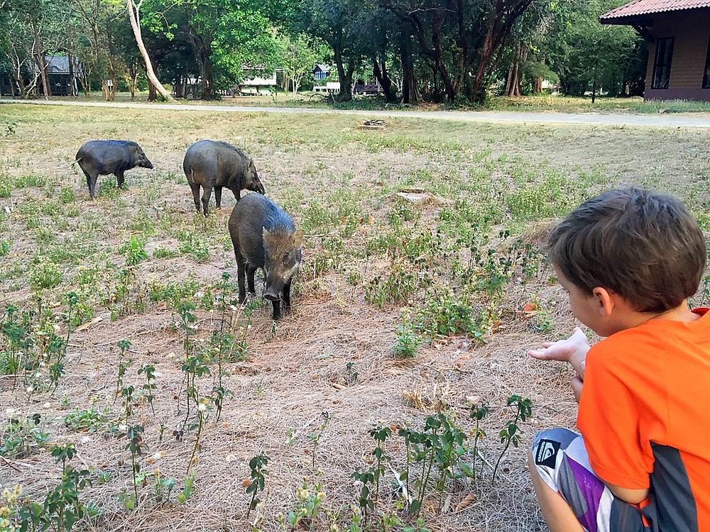 Martin et les cochons sauvages