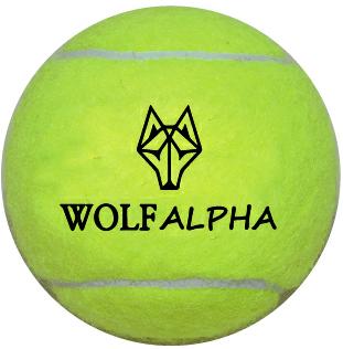 The WolfAlpha Training Ball