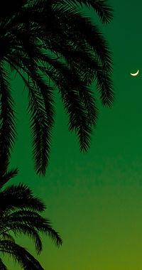 Palmeras en la Noche
