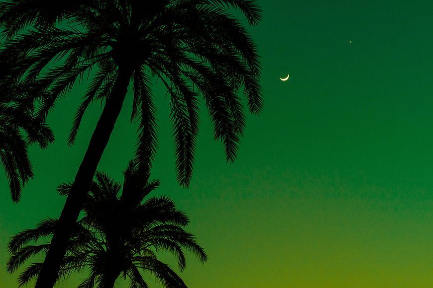 Palm Trees at Night