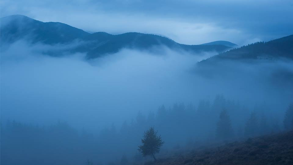 Dimitri Bogachuk       Landscape #1