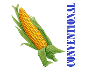 Arrow Hybrid Seed Conventional Corn