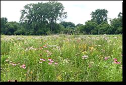 Native Meadows Concept