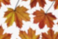 fall basket image.jpeg