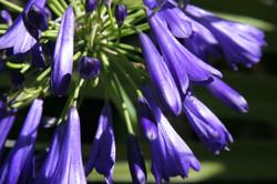 D Forrest - Bellelvue Botanical Gardens-2-108
