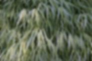 Bellelvue Botanical Gardens-2-95.JPG