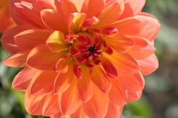 D Forrest - Bellelvue Botanical Gardens-2-58