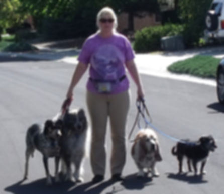 socialization, pack walk, behaviorist, dog behaviorist, dog training class, mental challenge, fearful, reactive, insecure, shy, dog games, behavior modification, well- behaved, group class, loose leash walking, heel, dog exercises, tracking, trailing